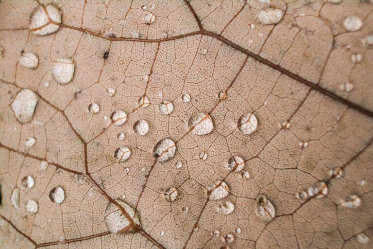 Почему кожа остается сухой даже после увлажнения