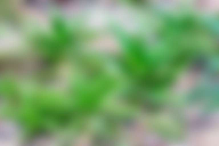 растение алоэ в естественной среде