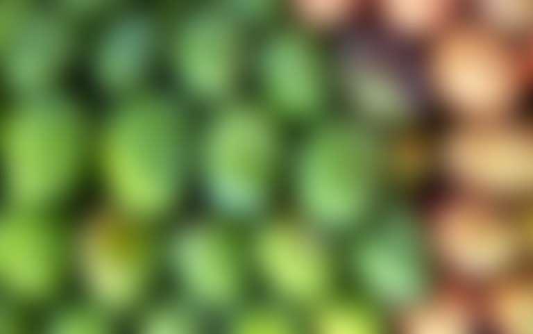 Зеленые и желтые плоды манго
