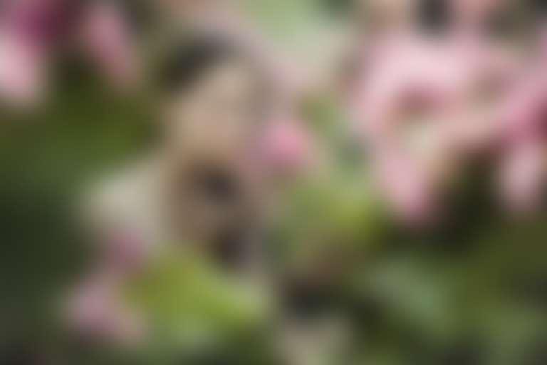 Девушка в саду вдыхает аромат розы