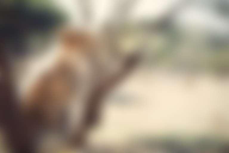 Детеныш гепарда с пятнистой расцветкой.