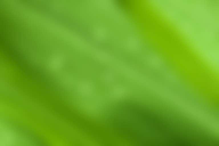 На зеленом листе растения капли воды