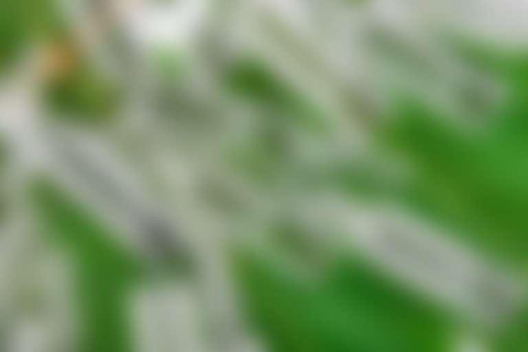Много ампул с прозрачной жидкостью на фоне зеленого листа