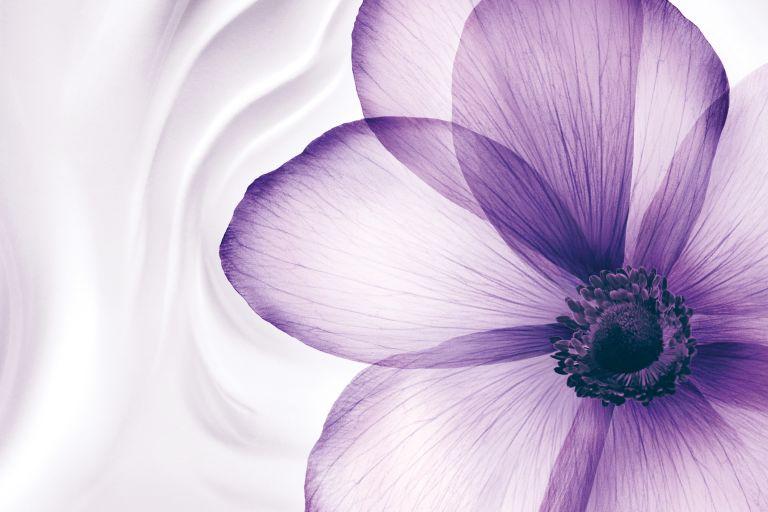 Лиловый цветок на фоне текстуры крема Rénergie