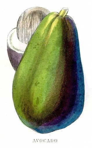 полезные компоненты авокадо