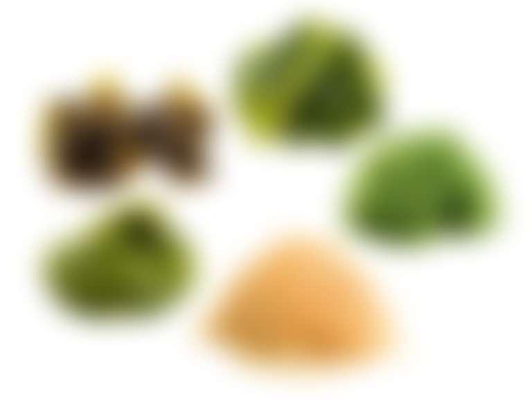 несколько видов водорослей