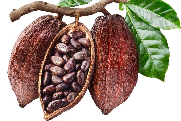 Масло какао свойства и применение для лица