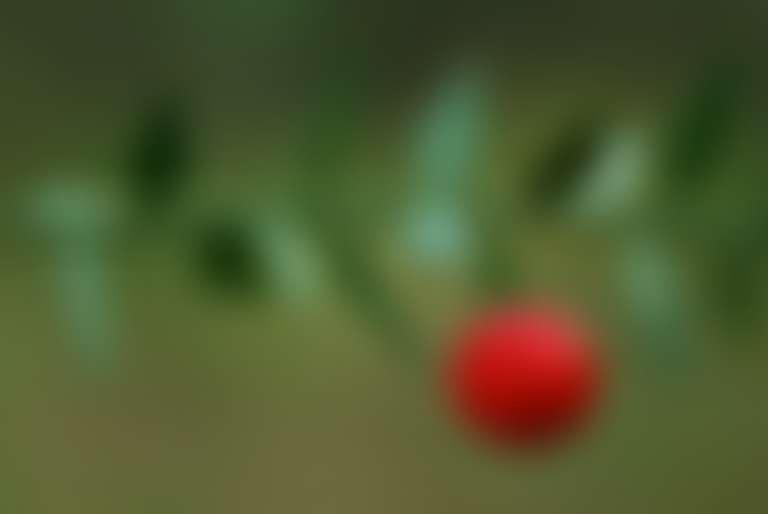 ветка иглицы с крупной красной ягодой