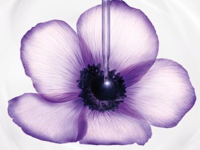 Цветок Lancôme с пипеткой на фоне текстуры крема Rénergie